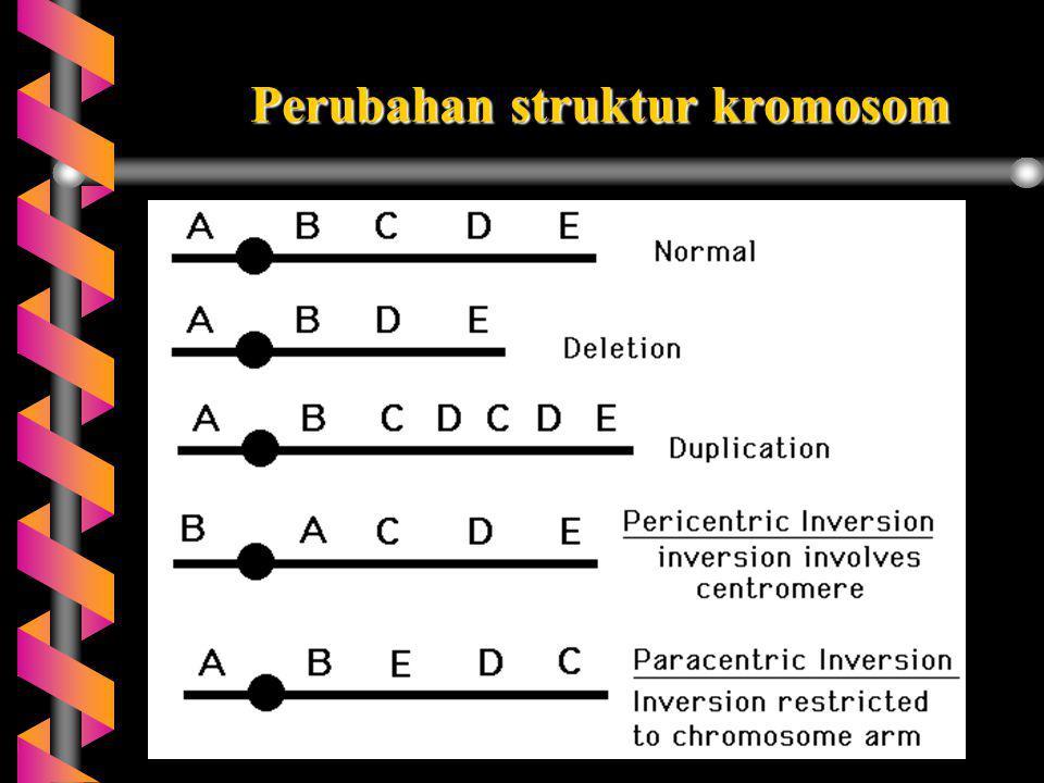 GEN-GEN TERPAUT SEKS b Kromosom seks mengandung gen  gen terpaut kelamin (sex-linkage genes) b Gen pada kromosom X tidak memiliki alel pada kromosom Y (bukan homolognya),  pola penurunan berbeda dg otosom.