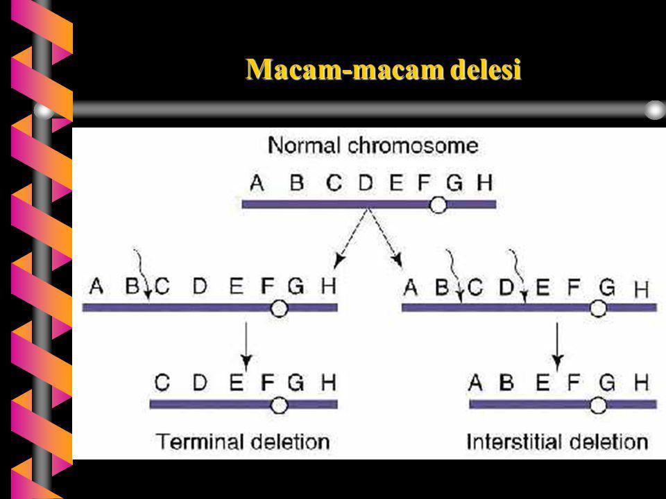 Variasi Jumlah Kromosom b Terminologi: b Euploidi:Mengandung seperangkat (set) kromosom b Poliploidi: individu dengan 3 atau lebih set kromosom b Triploid: individu dengan 3 set kromosom b Tetraploid: individu dengan 4 set kromosom, dst.