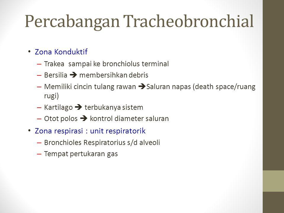Zona Konduktif – Trakea sampai ke bronchiolus terminal – Bersilia  membersihkan debris – Memiliki cincin tulang rawan  Saluran napas (death space/ruang rugi) – Kartilago  terbukanya sistem – Otot polos  kontrol diameter saluran Zona respirasi : unit respiratorik – Bronchioles Respiratorius s/d alveoli – Tempat pertukaran gas