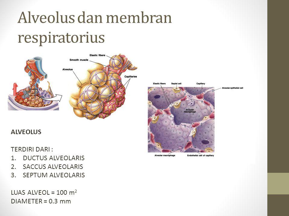 Alveolus dan membran respiratorius ALVEOLUS TERDIRI DARI : 1.