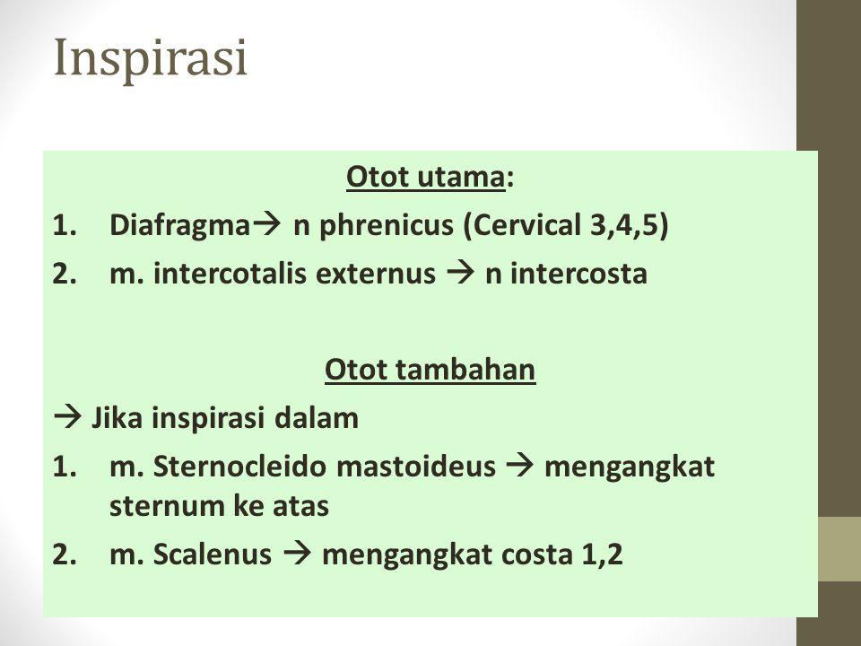 Inspirasi Otot utama: 1.Diafragma  n phrenicus (Cervical 3,4,5) 2.m.