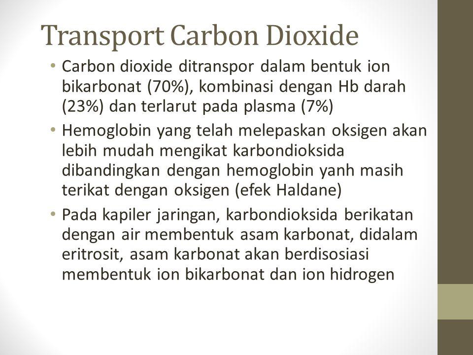 Transport Carbon Dioxide Carbon dioxide ditranspor dalam bentuk ion bikarbonat (70%), kombinasi dengan Hb darah (23%) dan terlarut pada plasma (7%) Hemoglobin yang telah melepaskan oksigen akan lebih mudah mengikat karbondioksida dibandingkan dengan hemoglobin yanh masih terikat dengan oksigen (efek Haldane) Pada kapiler jaringan, karbondioksida berikatan dengan air membentuk asam karbonat, didalam eritrosit, asam karbonat akan berdisosiasi membentuk ion bikarbonat dan ion hidrogen