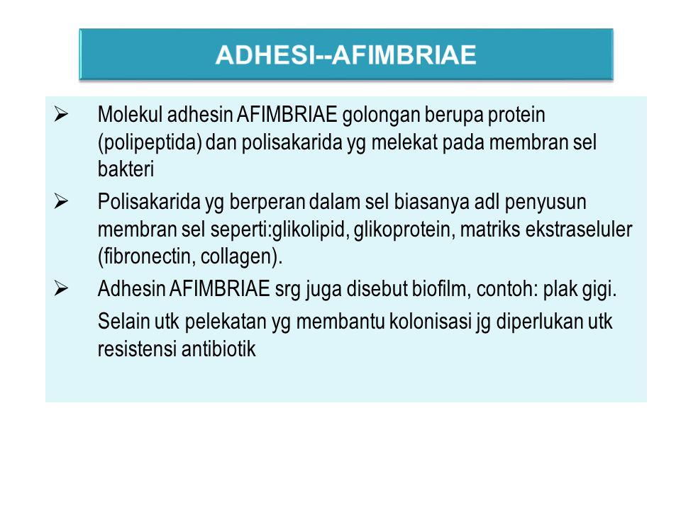  Molekul adhesin AFIMBRIAE golongan berupa protein (polipeptida) dan polisakarida yg melekat pada membran sel bakteri  Polisakarida yg berperan dalam sel biasanya adl penyusun membran sel seperti:glikolipid, glikoprotein, matriks ekstraseluler (fibronectin, collagen).
