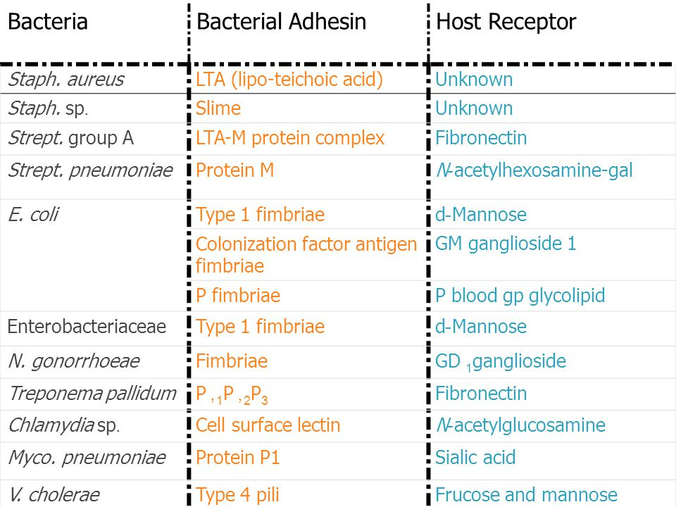 Examples of Bacterial Adherence MechanismsExamples of Bacterial Adherence Mechanisms Host ReceptorBacterial AdhesinBacteria UnknownLTA (lipo-teichoic acid)Staph.