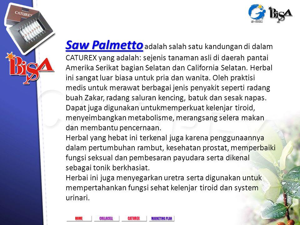 Golf Lake Residence Rukan Paris A-82, Cengkareng - Jakarta Barat Saw Palmetto Saw Palmetto Saw Palmetto Saw Palmetto adalah salah satu kandungan di da