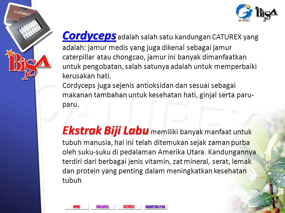 Golf Lake Residence Rukan Paris A-82, Cengkareng - Jakarta Barat Cordyceps Cordyceps Cordyceps adalah salah satu kandungan CATUREX yang adalah: jamur
