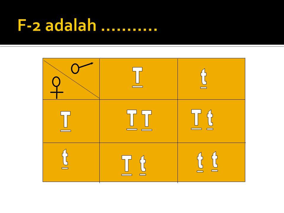 JJawab : Parental (P)Tinggixrendah TT tt GGamet Tx t KKeturunan 1 (F1)Tt ( tinggi )  P2Ttx Tt ggamet T T t t F2 = ……..?