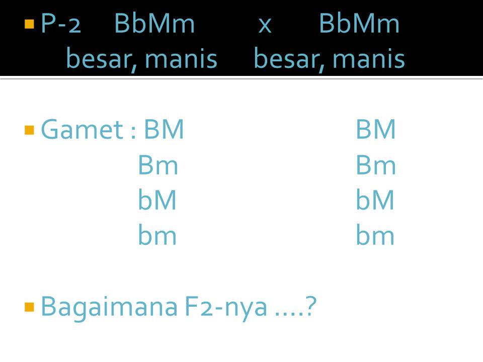  Jawab :  P-1 :besar, asamx kecil, manis, BBmmx bbMM G : Bmx bM F-1 : BbMm (besar manis)
