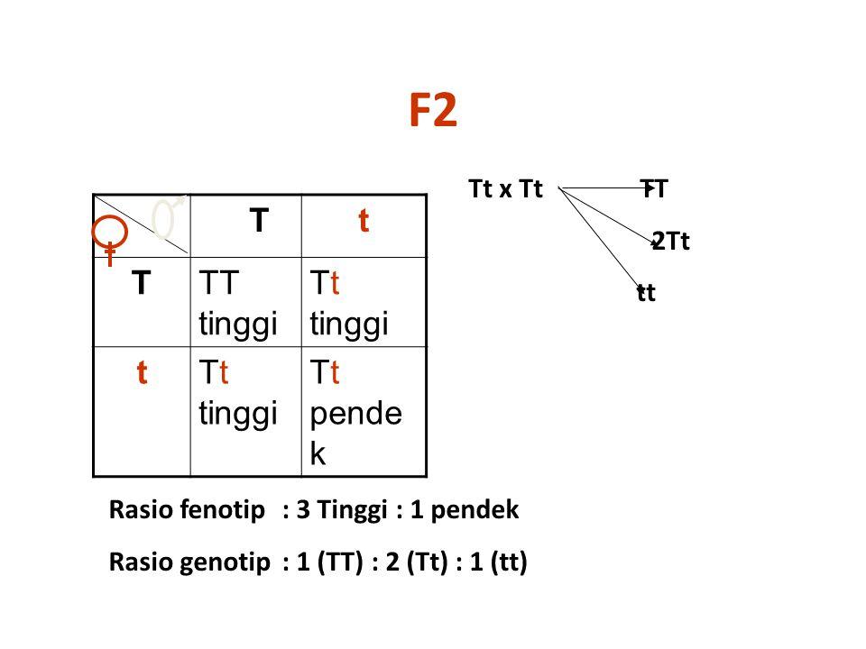 F2 Tt TTT tinggi Tt tinggi t Tt pende k Rasio fenotip : 3 Tinggi : 1 pendek Rasio genotip: 1 (TT) : 2 (Tt) : 1 (tt) Tt x Tt TT 2Tt tt