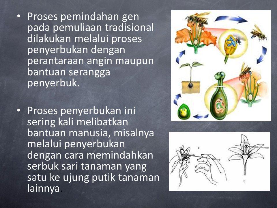 Proses pemindahan gen pada pemuliaan tradisional dilakukan melalui proses penyerbukan dengan perantaraan angin maupun bantuan serangga penyerbuk. Pros