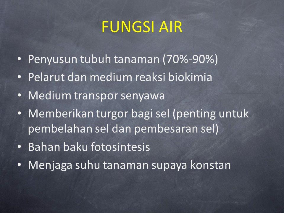 FUNGSI AIR Penyusun tubuh tanaman (70%-90%) Pelarut dan medium reaksi biokimia Medium transpor senyawa Memberikan turgor bagi sel (penting untuk pembe