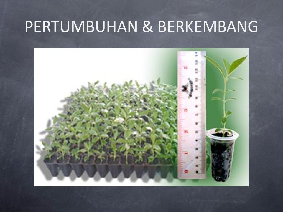 Pengertian tumbuh dan berkembang Pertumbuhan = pertambahan volume, ukuran dan berat tanaman sebagai akibat terjadinya pembelahan, perpanjangan dan pengelompokan sel tanaman tersebut.