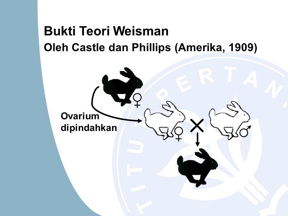 Bukti Teori Weisman Oleh Castle dan Phillips (Amerika, 1909) Ovarium dipindahkan