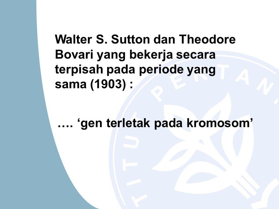 Walter S. Sutton dan Theodore Bovari yang bekerja secara terpisah pada periode yang sama (1903) : …. 'gen terletak pada kromosom'
