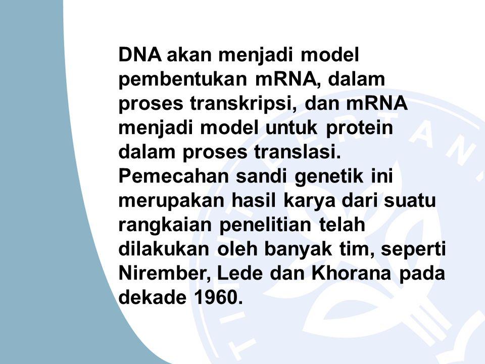 DNA akan menjadi model pembentukan mRNA, dalam proses transkripsi, dan mRNA menjadi model untuk protein dalam proses translasi. Pemecahan sandi geneti