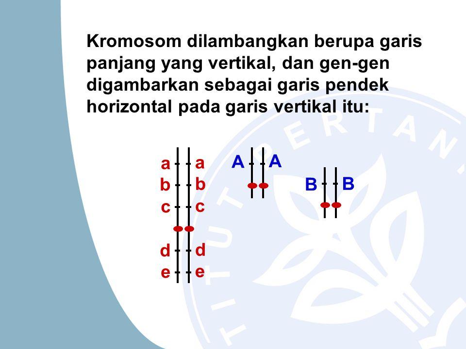 Kromosom dilambangkan berupa garis panjang yang vertikal, dan gen-gen digambarkan sebagai garis pendek horizontal pada garis vertikal itu: a b c d e a