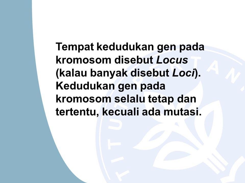Tempat kedudukan gen pada kromosom disebut Locus (kalau banyak disebut Loci). Kedudukan gen pada kromosom selalu tetap dan tertentu, kecuali ada mutas