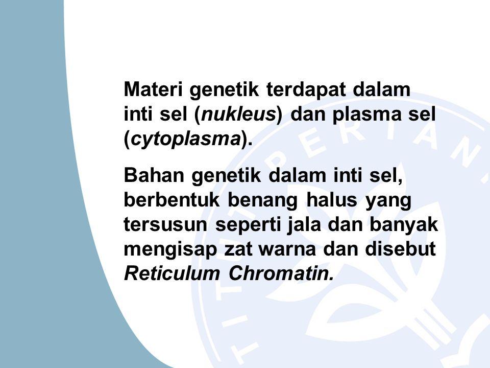 Materi genetik terdapat dalam inti sel (nukleus) dan plasma sel (cytoplasma). Bahan genetik dalam inti sel, berbentuk benang halus yang tersusun seper