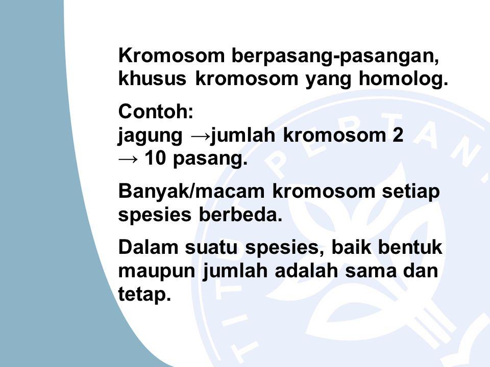 Kromosom berpasang-pasangan, khusus kromosom yang homolog. Contoh: jagung →jumlah kromosom 2 → 10 pasang. Banyak/macam kromosom setiap spesies berbeda
