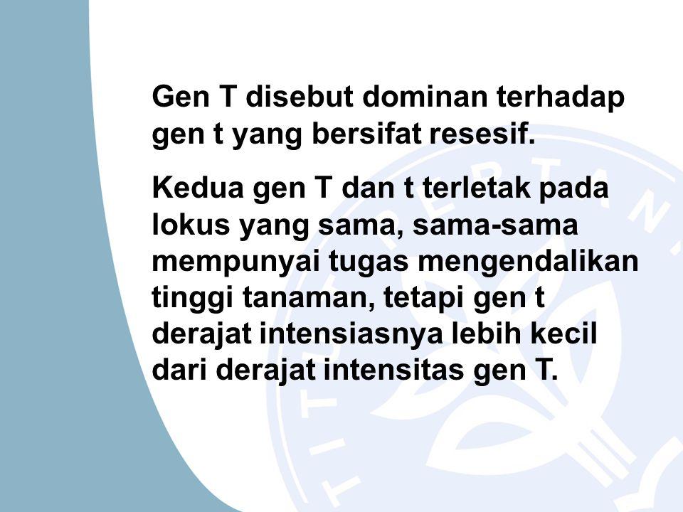 Gen T disebut dominan terhadap gen t yang bersifat resesif. Kedua gen T dan t terletak pada lokus yang sama, sama-sama mempunyai tugas mengendalikan t