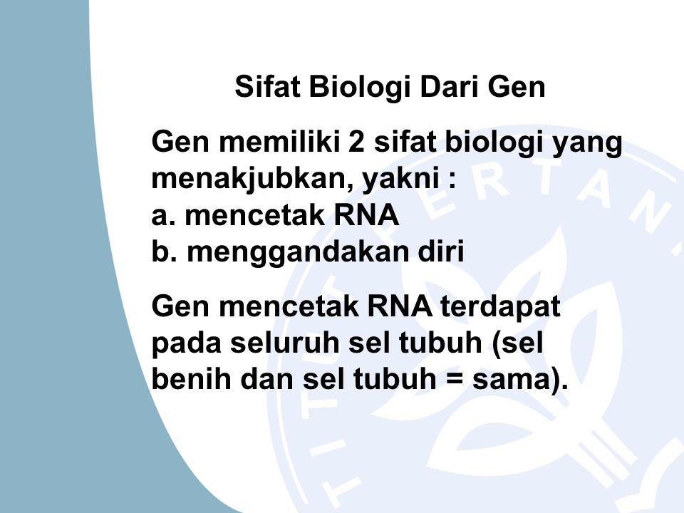 Sifat Biologi Dari Gen Gen memiliki 2 sifat biologi yang menakjubkan, yakni : a. mencetak RNA b. menggandakan diri Gen mencetak RNA terdapat pada selu