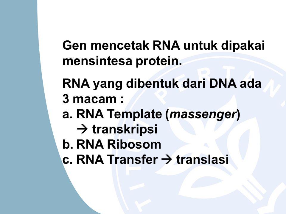 Gen mencetak RNA untuk dipakai mensintesa protein. RNA yang dibentuk dari DNA ada 3 macam : a.RNA Template (massenger)  transkripsi b.RNA Ribosom c.R