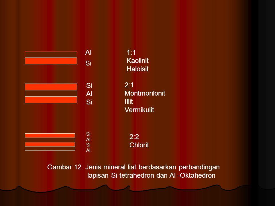 Si Al Si Al Si Al Si Al 1:1 Kaolinit Haloisit 2:1 Montmorilonit Illit Vermikulit 2:2 Chlorit Gambar 12. Jenis mineral liat berdasarkan perbandingan la