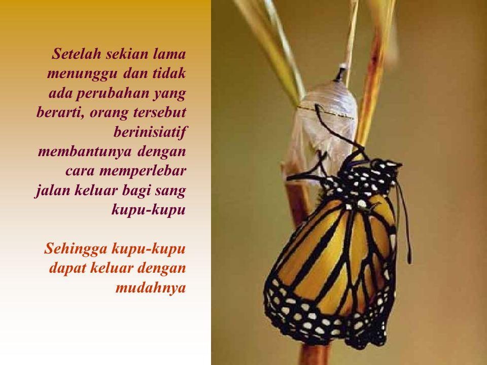 Kupu-kupu keluar dengan badan yang menggembung, pendek dan sayapnya kusut Detik demi detik ia cermati dengan penuh harap agar sayap kupu- kupu tadi bisa mekar dan mengembang untuk kemudian segera terbang