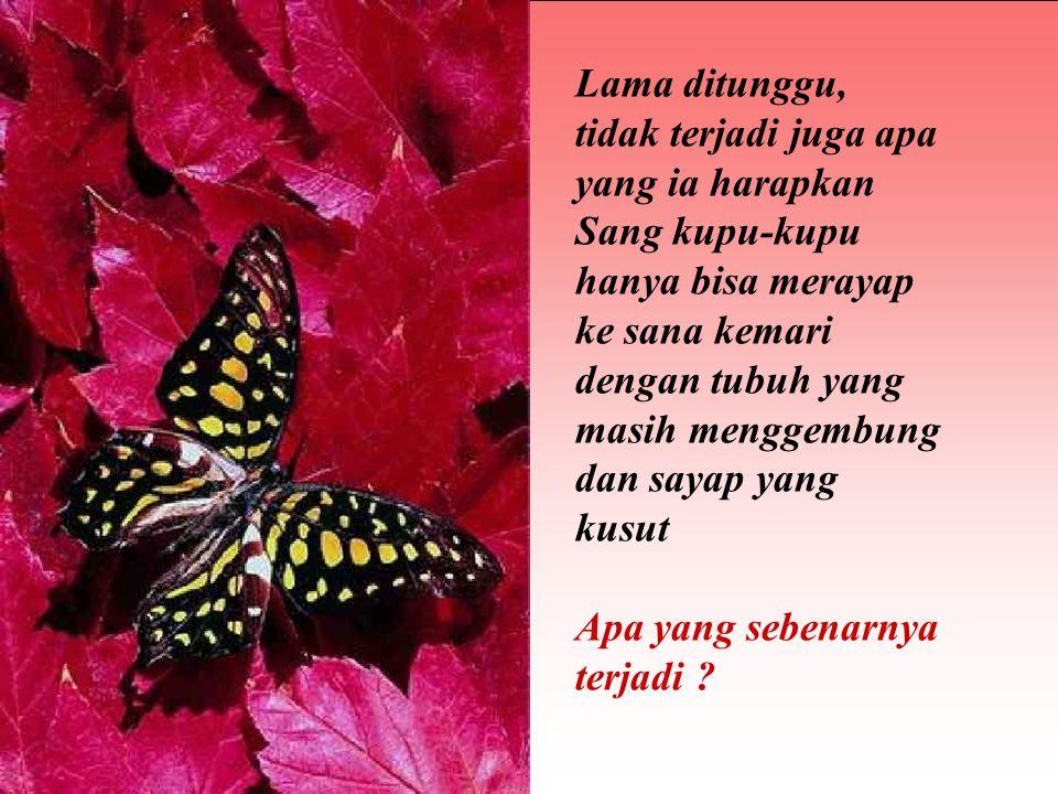 Ternyata di balik keinginan baik orang tersebut, sebenarnya ia tidak tahu bahwa perjuangan sang kupu untuk melewati sempitnya lubang kepompong merupakan kehendak Allah SWT sebagai jalan untuk menyalurkan cairan dari tubuh kupu-kupu ke dalam sayapnya, sehingga membentuk sayap yang siap untuk terbang