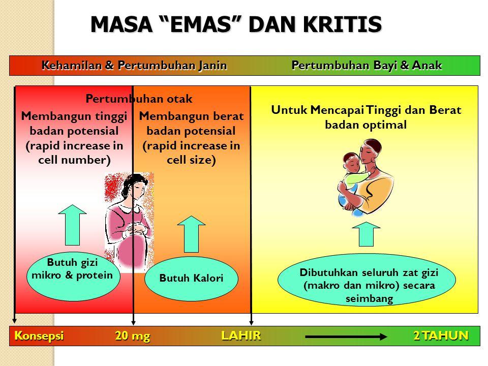"""Membangun berat badan potensial (rapid increase in cell size) MASA """"EMAS"""" DAN KRITIS Membangun tinggi badan potensial (rapid increase in cell number)"""