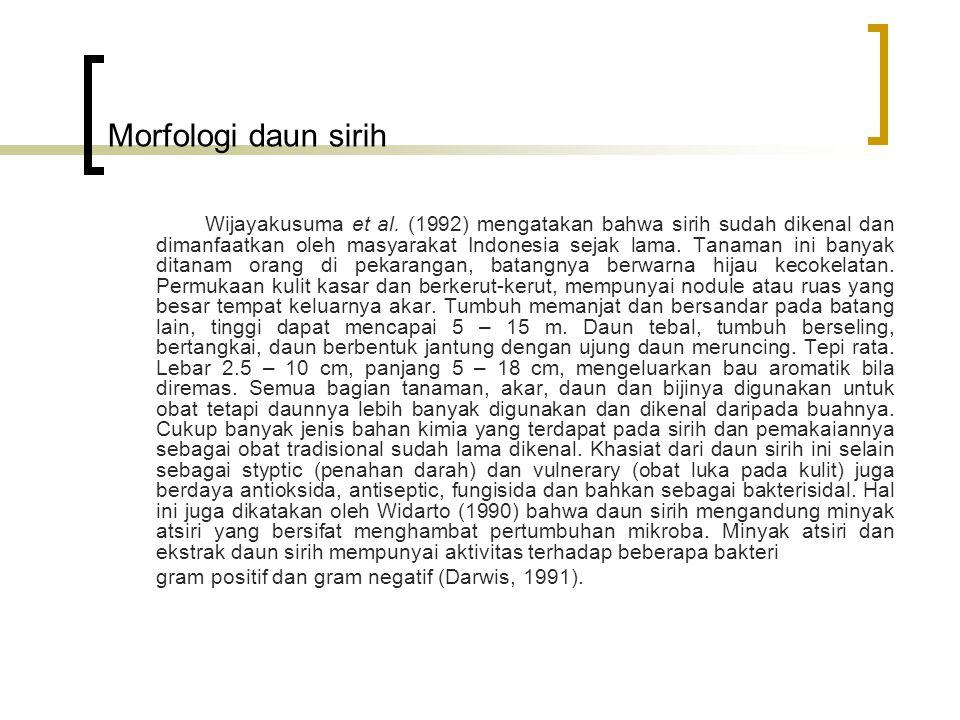 Morfologi daun sirih Wijayakusuma et al. (1992) mengatakan bahwa sirih sudah dikenal dan dimanfaatkan oleh masyarakat Indonesia sejak lama. Tanaman in