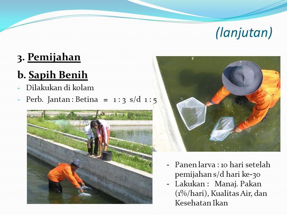 TelurLarva Penetasan Telur (hatchery)Penebaran Larva