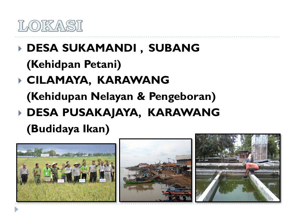  DESA SUKAMANDI, SUBANG (Kehidpan Petani)  CILAMAYA, KARAWANG (Kehidupan Nelayan & Pengeboran)  DESA PUSAKAJAYA, KARAWANG (Budidaya Ikan)