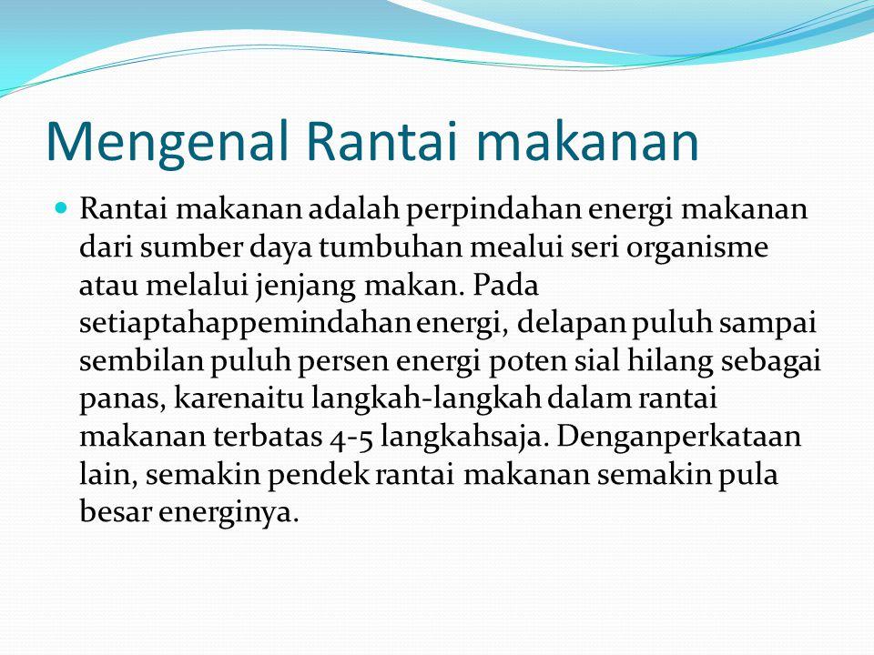 Mengenal Rantai makanan Rantai makanan adalah perpindahan energi makanan dari sumber daya tumbuhan mealui seri organisme atau melalui jenjang makan.