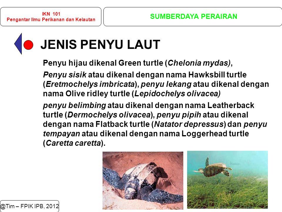 JENIS PENYU LAUT @Tim – FPIK IPB, 2012 IKN 101 Pengantar Ilmu Perikanan dan Kelautan SUMBERDAYA PERAIRAN Penyu hijau dikenal Green turtle (Chelonia mydas), Penyu sisik atau dikenal dengan nama Hawksbill turtle (Eretmochelys imbricata), penyu lekang atau dikenal dengan nama Olive ridley turtle (Lepidochelys olivacea) penyu belimbing atau dikenal dengan nama Leatherback turtle (Dermochelys olivacea), penyu pipih atau dikenal dengan nama Flatback turtle (Natator depressus) dan penyu tempayan atau dikenal dengan nama Loggerhead turtle (Caretta caretta).