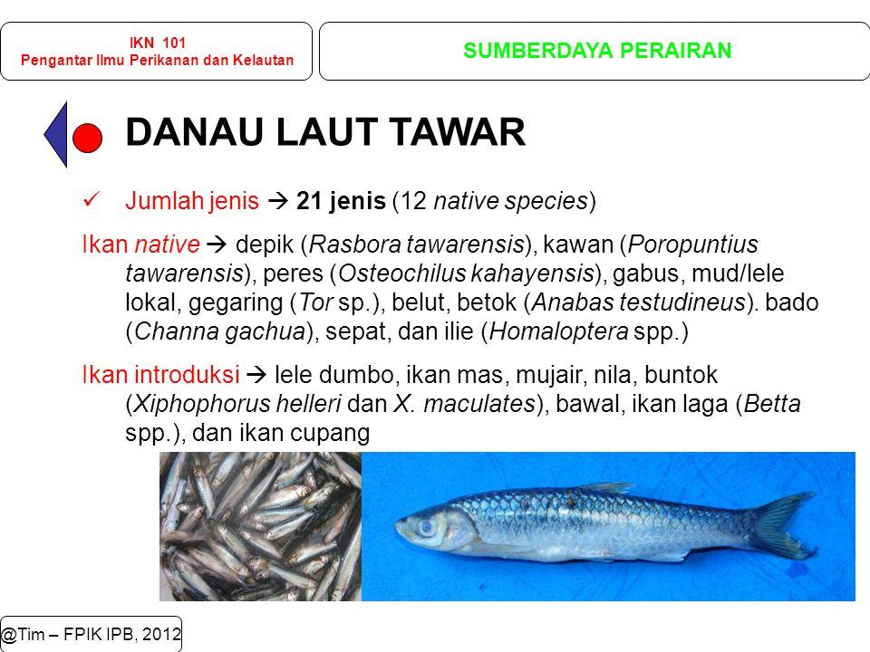 DANAU LAUT TAWAR @Tim – FPIK IPB, 2012 IKN 101 Pengantar Ilmu Perikanan dan Kelautan SUMBERDAYA PERAIRAN Jumlah jenis  21 jenis (12 native species) Ikan native  depik (Rasbora tawarensis), kawan (Poropuntius tawarensis), peres (Osteochilus kahayensis), gabus, mud/lele lokal, gegaring (Tor sp.), belut, betok (Anabas testudineus).