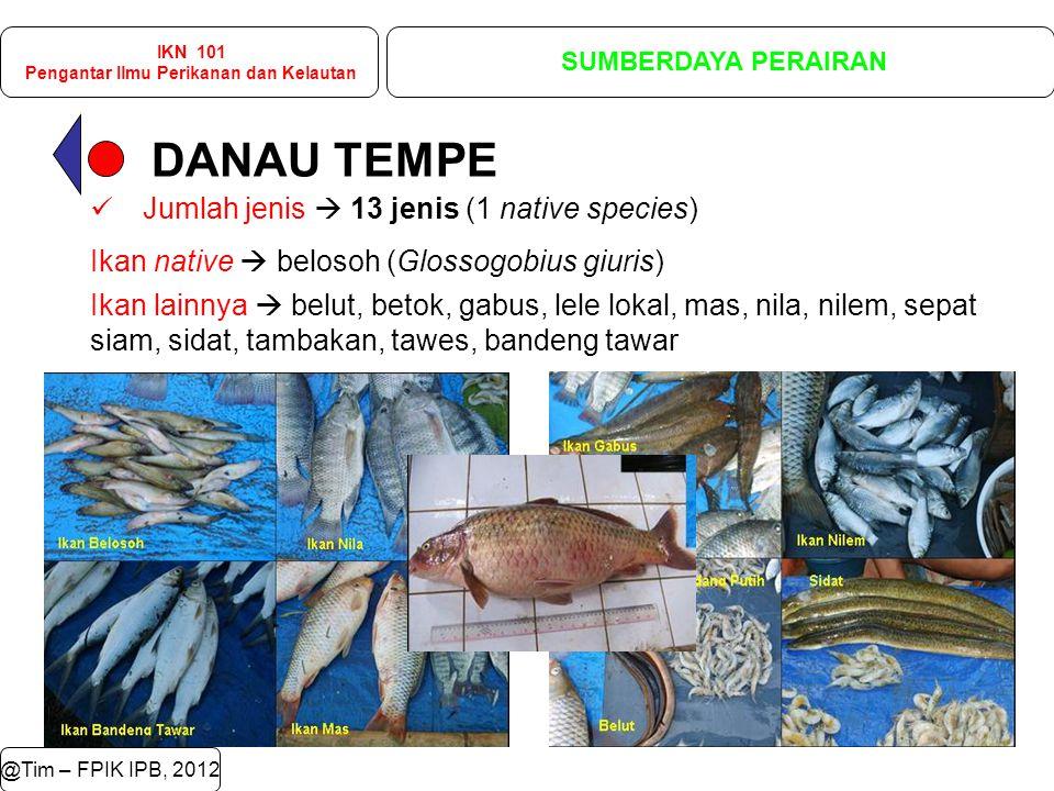 DANAU TEMPE @Tim – FPIK IPB, 2012 IKN 101 Pengantar Ilmu Perikanan dan Kelautan SUMBERDAYA PERAIRAN Jumlah jenis  13 jenis (1 native species) Ikan native  belosoh (Glossogobius giuris) Ikan lainnya  belut, betok, gabus, lele lokal, mas, nila, nilem, sepat siam, sidat, tambakan, tawes, bandeng tawar