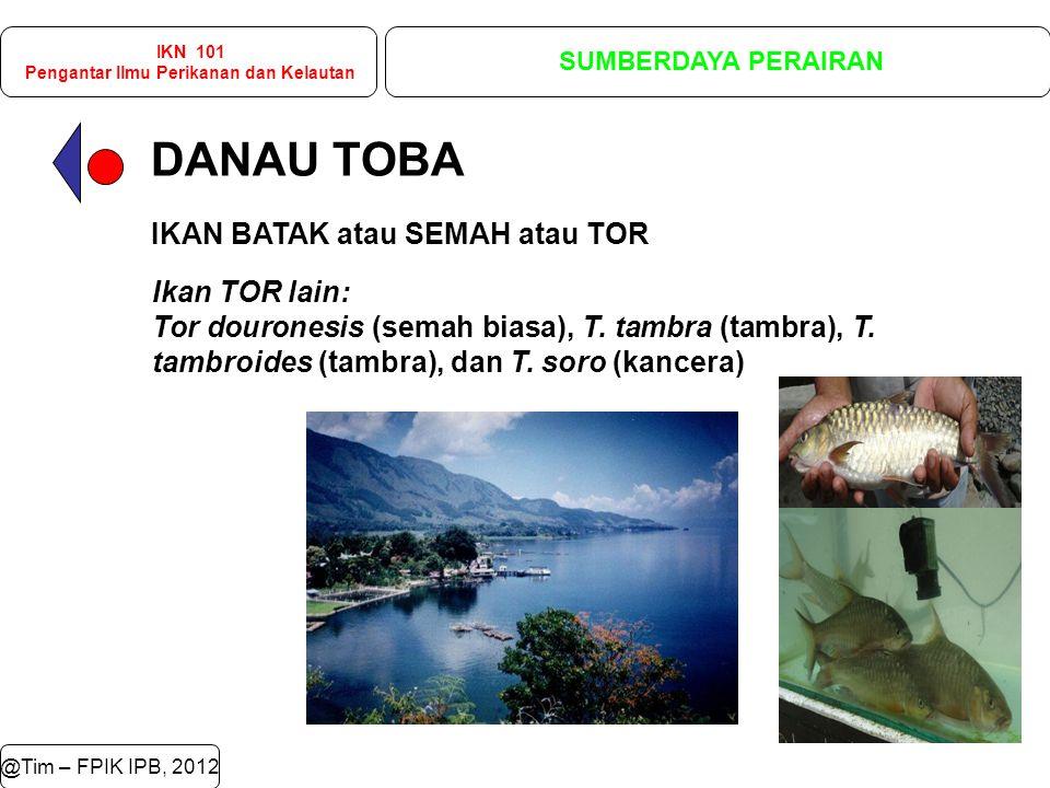 DANAU TOBA @Tim – FPIK IPB, 2012 IKN 101 Pengantar Ilmu Perikanan dan Kelautan SUMBERDAYA PERAIRAN IKAN BATAK atau SEMAH atau TOR Ikan TOR lain: Tor douronesis (semah biasa), T.