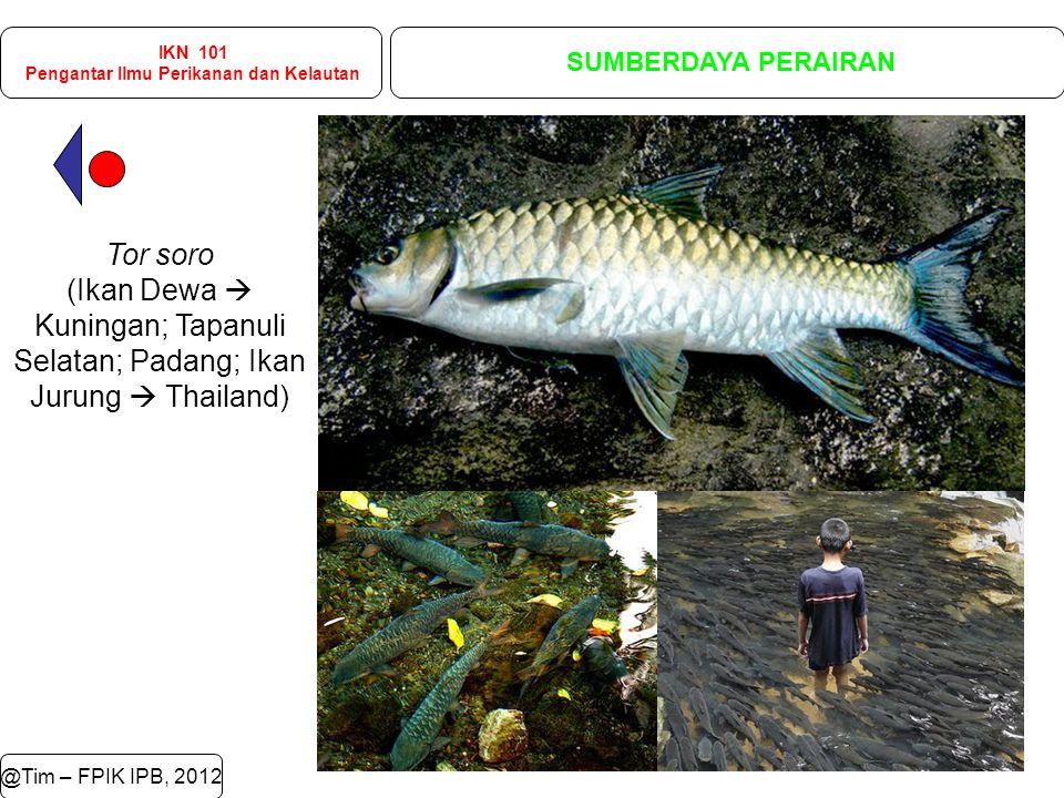 @Tim – FPIK IPB, 2012 IKN 101 Pengantar Ilmu Perikanan dan Kelautan SUMBERDAYA PERAIRAN Tor soro (Ikan Dewa  Kuningan; Tapanuli Selatan; Padang; Ikan Jurung  Thailand)