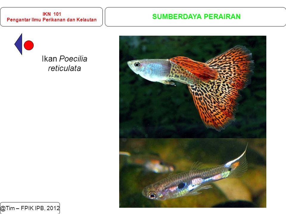 @Tim – FPIK IPB, 2012 IKN 101 Pengantar Ilmu Perikanan dan Kelautan SUMBERDAYA PERAIRAN Ikan Poecilia reticulata