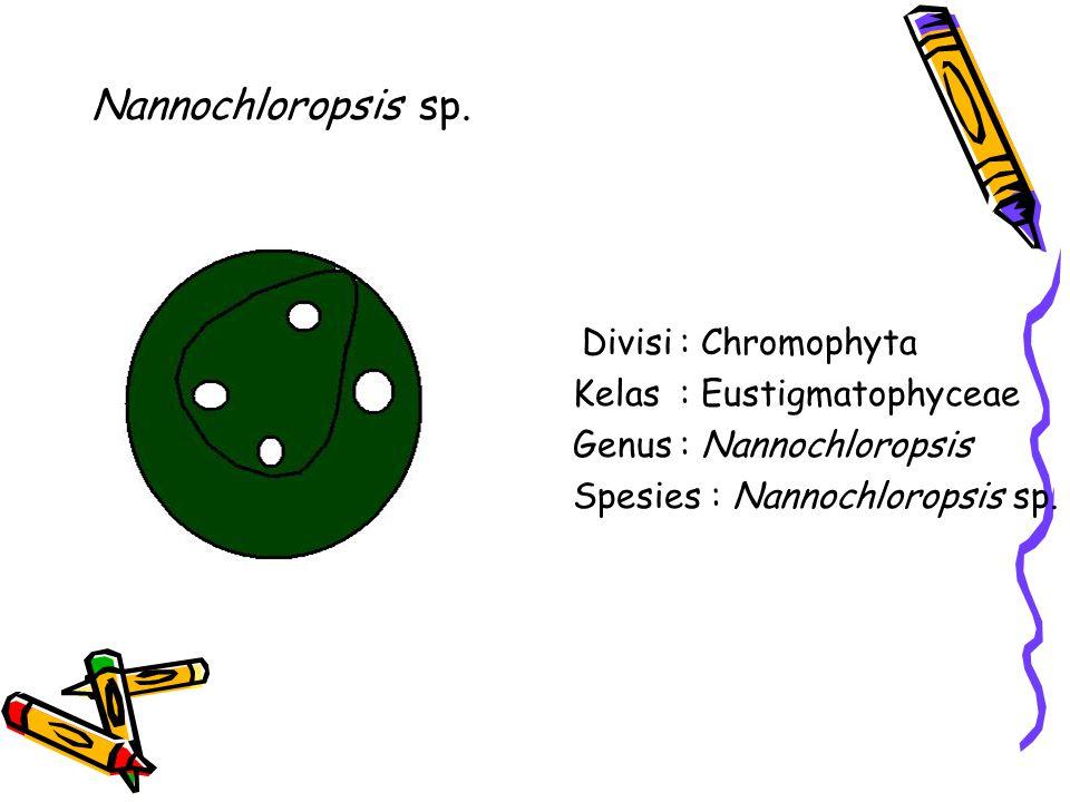 Nannochloropsis sp.
