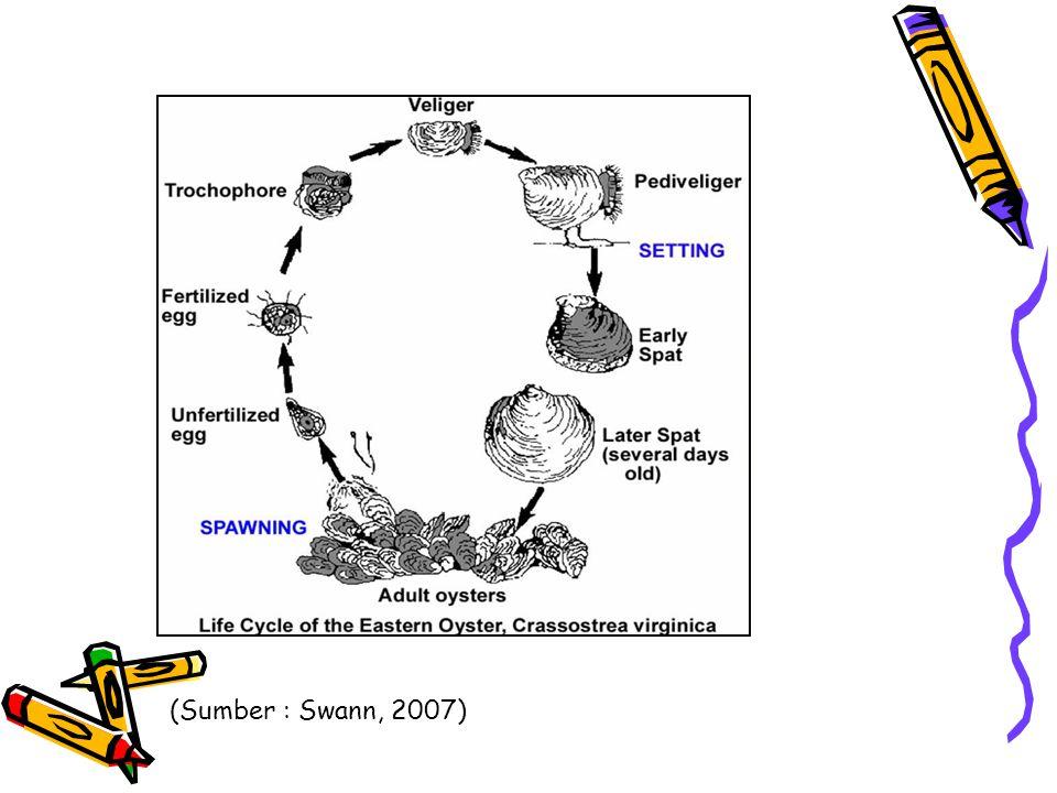 (Sumber : Swann, 2007)