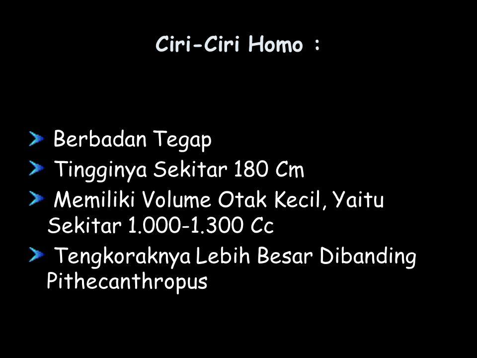 Ciri-Ciri Homo : Berbadan Tegap Tingginya Sekitar 180 Cm Memiliki Volume Otak Kecil, Yaitu Sekitar 1.000-1.300 Cc Tengkoraknya Lebih Besar Dibanding P