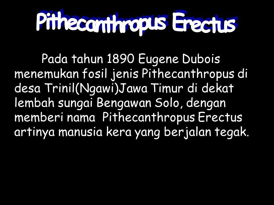Pada tahun 1890 Eugene Dubois menemukan fosil jenis Pithecanthropus di desa Trinil(Ngawi)Jawa Timur di dekat lembah sungai Bengawan Solo, dengan membe