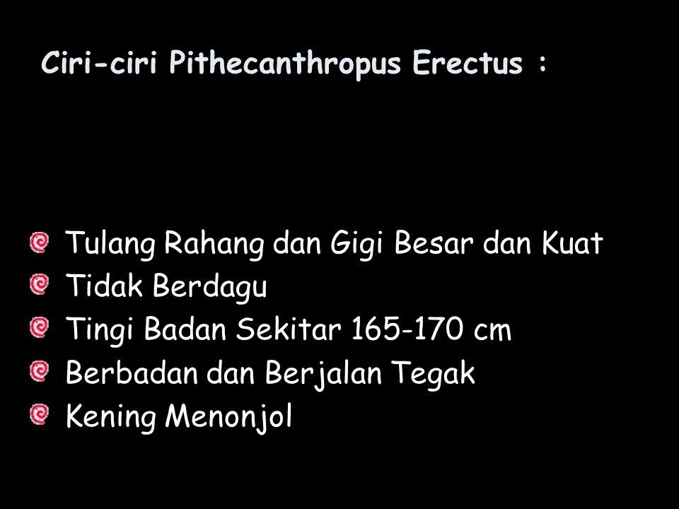 Ciri-ciri Pithecanthropus Erectus : Tulang Rahang dan Gigi Besar dan Kuat Tidak Berdagu Tingi Badan Sekitar 165-170 cm Berbadan dan Berjalan Tegak Ken
