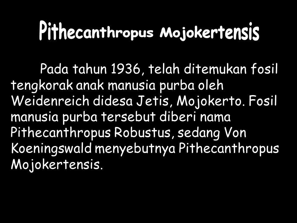 Pada tahun 1936, telah ditemukan fosil tengkorak anak manusia purba oleh Weidenreich didesa Jetis, Mojokerto. Fosil manusia purba tersebut diberi nama