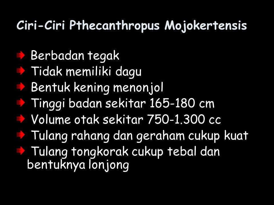 Ciri-Ciri Pthecanthropus Mojokertensis Berbadan tegak Tidak memiliki dagu Bentuk kening menonjol Tinggi badan sekitar 165-180 cm Volume otak sekitar 7