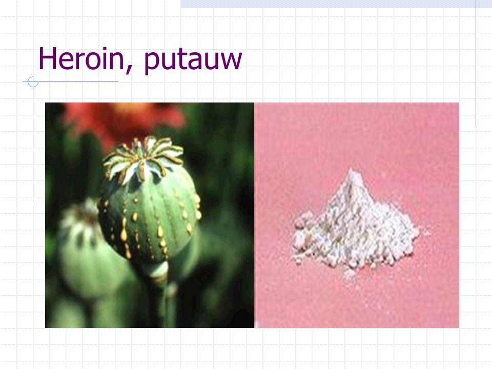 Penggolongan Golongan I : digunakan untuk tujuan ilmu pengetahuan, tidak ditujukan untuk terapi potensi sangat tinggi menimbulkan ketergantungan, Contoh: heroin/putauw, kokain, ganja
