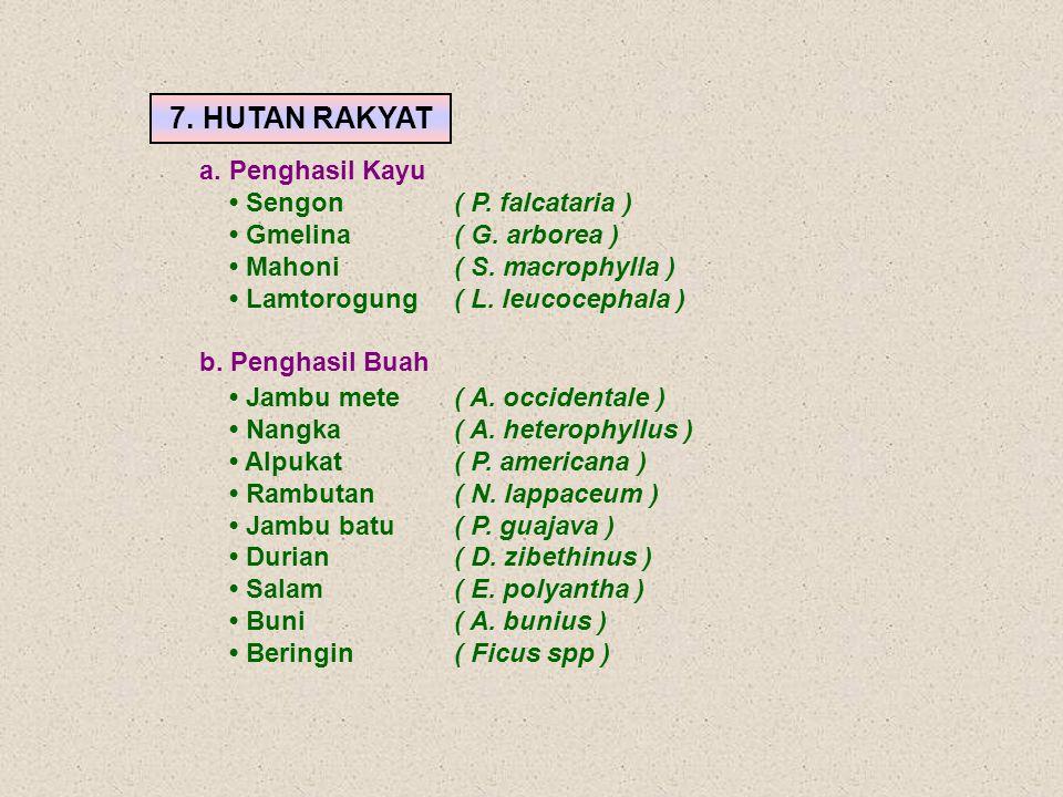 Jambu mete( A. occidentale ) Nangka( A. heterophyllus ) Alpukat( P. americana ) Rambutan( N. lappaceum ) Jambu batu ( P. guajava ) Durian( D. zibethin