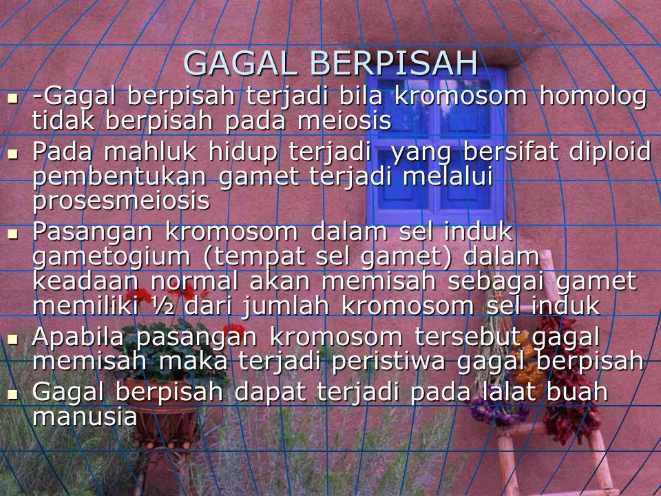 GAGAL BERPISAH -Gagal berpisah terjadi bila kromosom homolog tidak berpisah pada meiosis -Gagal berpisah terjadi bila kromosom homolog tidak berpisah pada meiosis Pada mahluk hidup terjadi yang bersifat diploid pembentukan gamet terjadi melalui prosesmeiosis Pada mahluk hidup terjadi yang bersifat diploid pembentukan gamet terjadi melalui prosesmeiosis Pasangan kromosom dalam sel induk gametogium (tempat sel gamet) dalam keadaan normal akan memisah sebagai gamet memiliki ½ dari jumlah kromosom sel induk Pasangan kromosom dalam sel induk gametogium (tempat sel gamet) dalam keadaan normal akan memisah sebagai gamet memiliki ½ dari jumlah kromosom sel induk Apabila pasangan kromosom tersebut gagal memisah maka terjadi peristiwa gagal berpisah Apabila pasangan kromosom tersebut gagal memisah maka terjadi peristiwa gagal berpisah Gagal berpisah dapat terjadi pada lalat buah manusia Gagal berpisah dapat terjadi pada lalat buah manusia